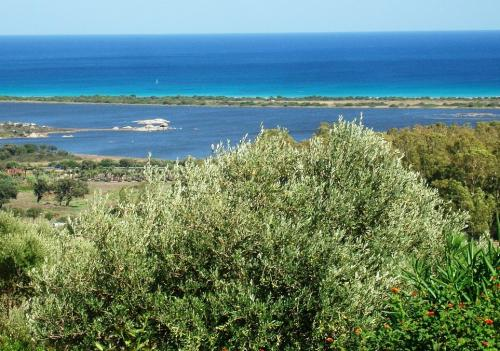 Sardegna- villa in vendita a San teodoro