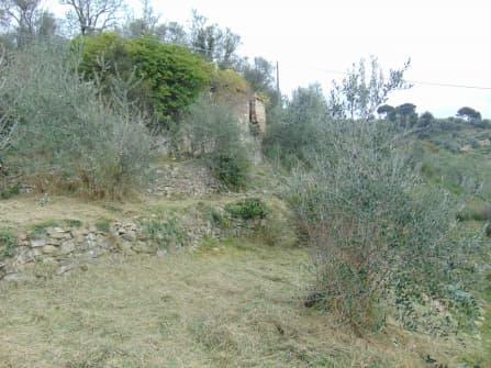Vallebona terreno con rustico in vendita