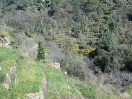 Vallebona building land for sale