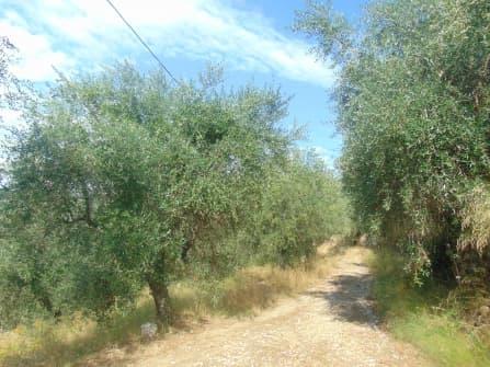 Dolceacqua building land for sale