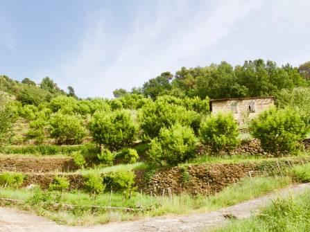 Soldano à vendre terrain avec rustique