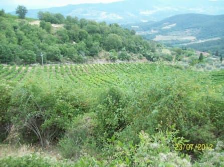 Винодельческая усадьба в Греве-ин-Кьянти