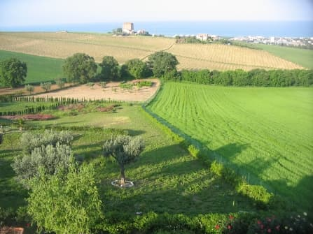 Land for sale in Marche