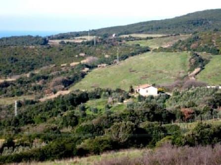 Вилла с оливковой рощей в Кастильончелло