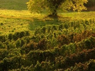 Gragnano Ranch / Farm For Sale
