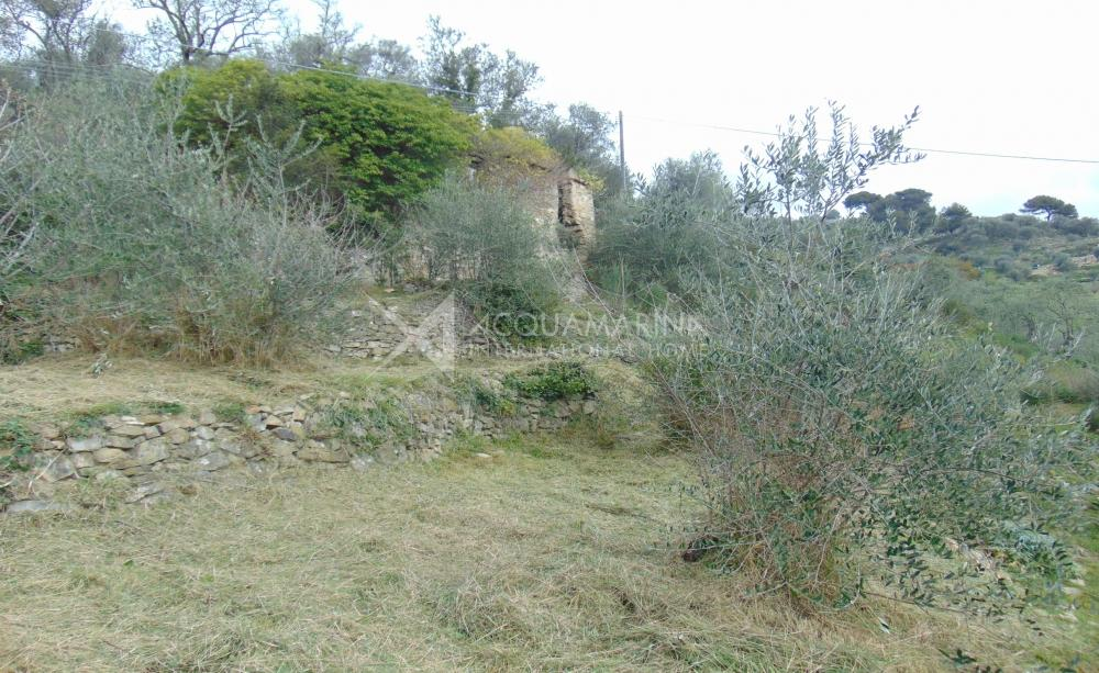 Vallebona land with rustic for sale<br />1/10
