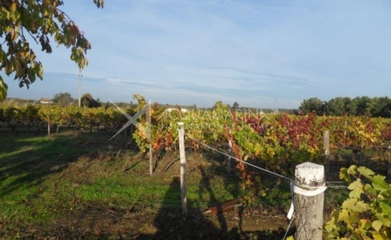 ENTRE DEUX MERS Vineyard For Sale<br />1/4